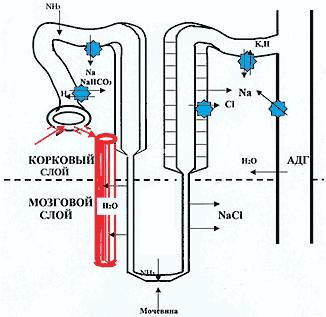 preparata-ot-arterialnoy-gipertonii